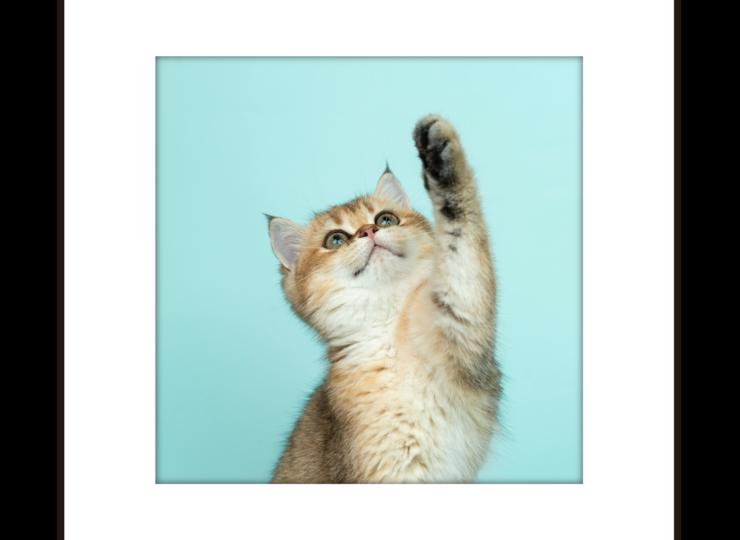 003-cat