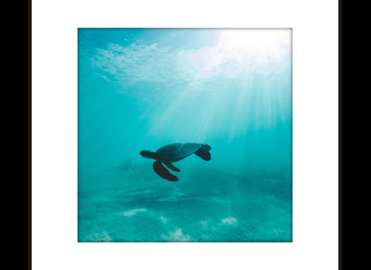 008-turtle