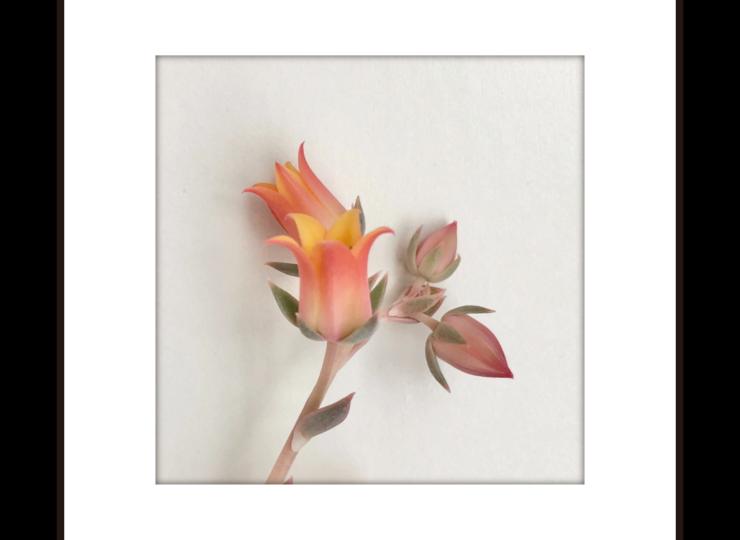 012-flower