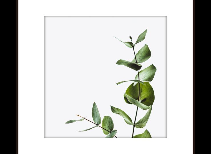 015-plant