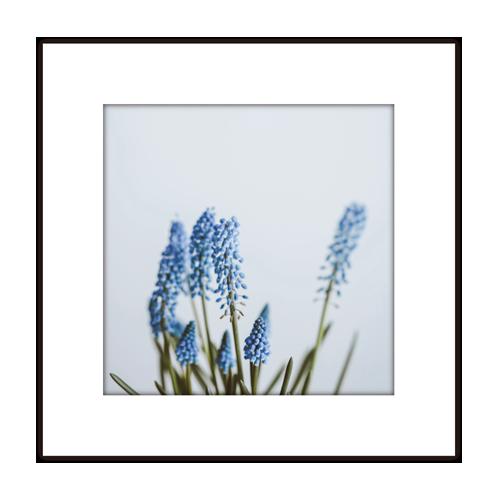 016-flower